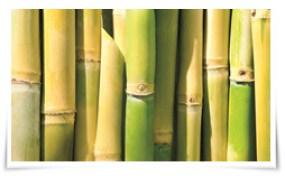 Photo of Los nuevos envases de Tetra Pak son de LDPE a base de caña de azúcar.