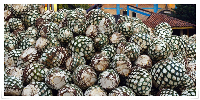 Photo of Empaques inteligentes con agave