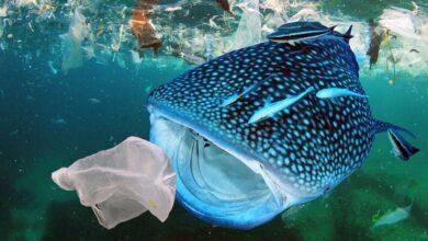 PLASTICS responde a la aprobación del acta Save Our Seas 2.0