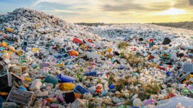 Gusanos que comen plástico: ¿una solución para el problema de residuos?
