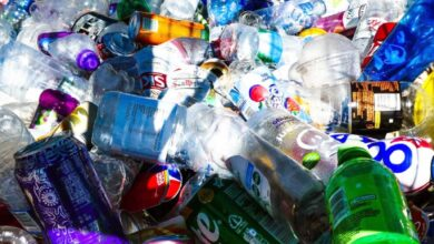 Reciclaje de plástico con bacterias: una alternativa para la reutilización de desechos