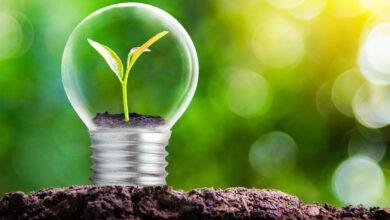 Desarrollan el proceso con menor costo para producir plásticos compostables
