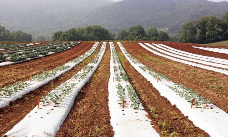 Plásticos para el sector agrícola: aplicaciones y oportunidades