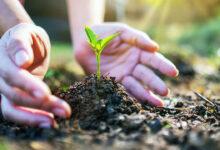 Michelin y el FIQMA unen esfuerzos por el medio ambiente