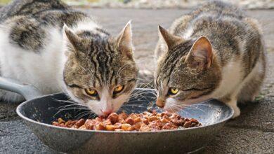 Nylon: El protector de alimentos para mascotas